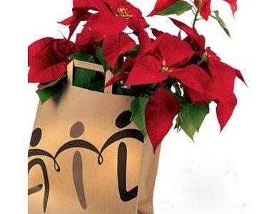 Stella di Natale AIL